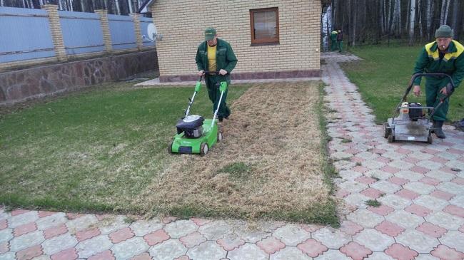скарификация газона осенью и весной