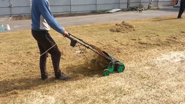 скарификация газона весной
